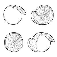 Grapefruit, Orange Vector Illustration Hand Drawn Fruit Cartoon Art