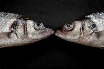 Two sea bass kissing concept