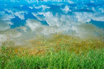 Green grass white wild flowers, dark blue sky reflected water