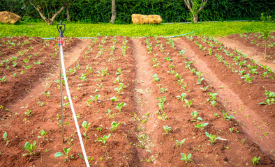Watering irrigate tap on plantation