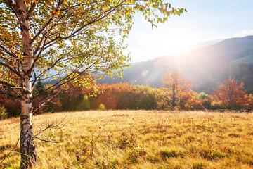 Autumn in mountain, amazing landscape