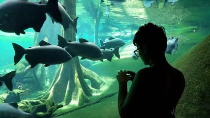 Chica a contraluz haciendo fotos en acuario, con grandes peces