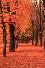 Autocollant pour porte Rouge traffic path in the autumn park