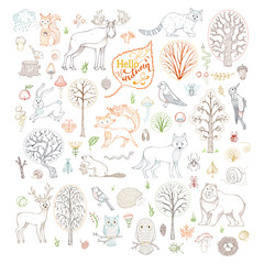 Vector set of outlined autumn forest trees, animals, birds and insects.