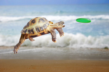 Turtle jumps and catches the frisbee Wall mural