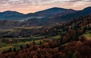 forest on hills in mountainous countryside at dawn