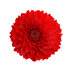 Keuken foto achterwand Dahlia dahlia red isolate on white background