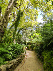 Path in the forest at Monserrate Park and Palace in Sintra, Portugal