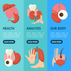 Cartoon Human Internal Organs Banner Vecrtical Set. Vector