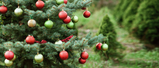 Decorated Christmas tree in pine park