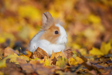 Little rabbit sitting in the leaves in autumn