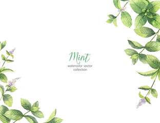 Watercolor vector frame of mint branches isolated on white background.