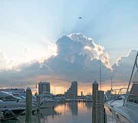 Miami Sunrise Bird Flying Above Sun Rays of Light Morning Glowing Clouds