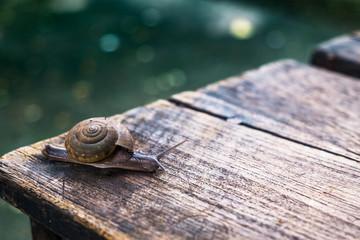 Little snail on wooden table