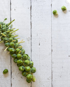 Stalk of organic Brussels sprouts