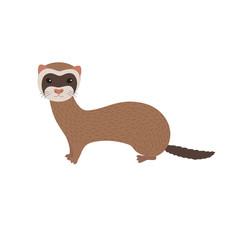 Vector illustration of ferret . Smiling cartoon character.