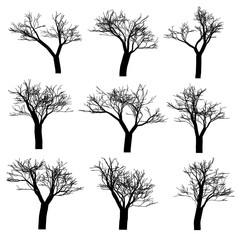 A set of oak trees. Vector illustration.