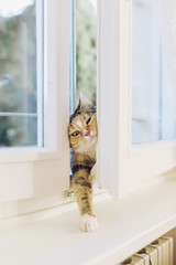 Seriously, can anybody let me in?