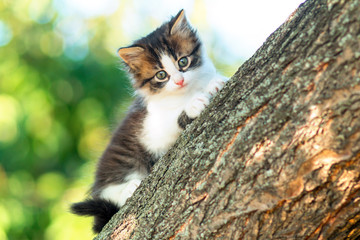 portrait of a cute little fluffy kitty climbing on a tree branch in the nature