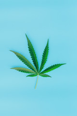 green marijuana leaf on blue background