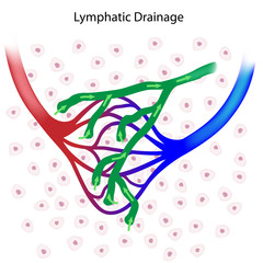 Lymphatic drainage unlabeled