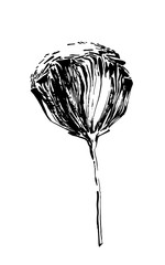 Hand drawn black stylized flower painted by ink. Vector illustration usable as print or pattern.