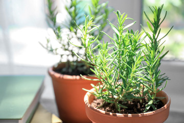 Wall Murals Spices Pot with rosemary on blurred background