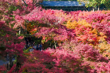 Japan Autumn Itinerary