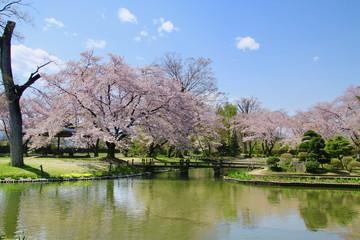 伊佐須美神社の桜(会津美里町)