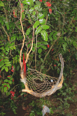 Pagan Willow dream catchers