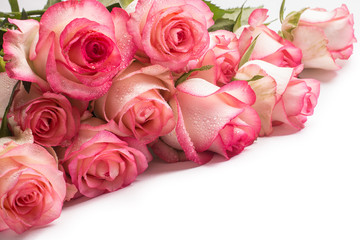 bouquet of pink rose flowers on white background.