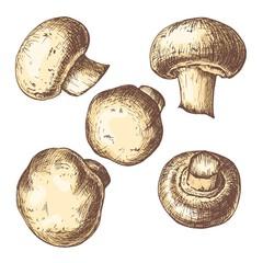 Botanical mushrooms hand drawn colorful etching set isolated on white background. Vintage vector illustration.