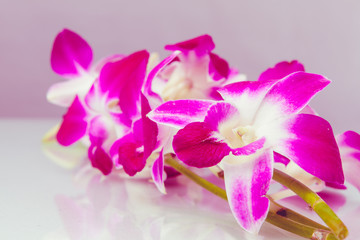 Thailand orchid.