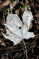 dead leaf on the ground