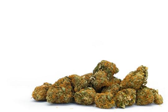 Marijuana buds isolated on a white background.