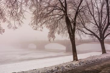 longest in Europe linden alley on winter foggy and frosty morning. Mysterious scenery near the Masaryk bridge in Uzhgorod, Ukraine