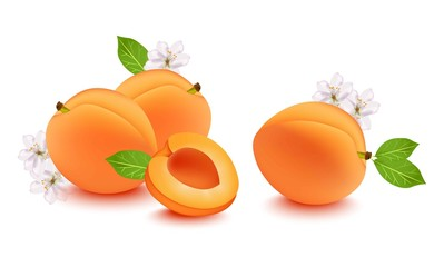 Realistic peach and flower blossom Vector illustration. Fresh fruits on white background