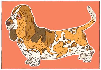 Hound - Basset