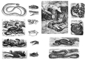 Illustration of snakes on a white background.