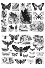 Collection of butterflies on a white background.