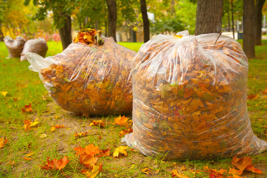 autumn cleaning in the park