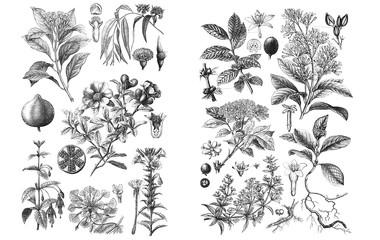 Illustrations of plants. Set on white background