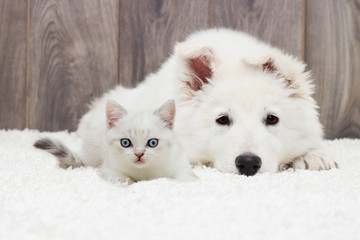 Wall Mural - kitten and puppy