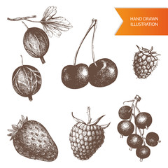 Vector collection  of hand drawn berries illustrations. Vintage sketches set . High detailed food elements.