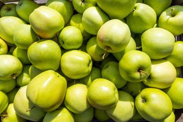 Blick in eine Kiste mit einem Haufen frisch gepflückten grünen Äpfeln