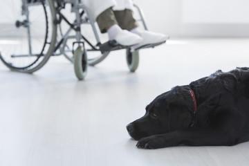 Close-up of black dog assistant