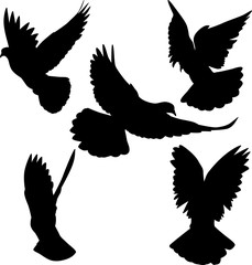 five pigeon black isolated silhouettes