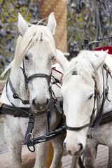 St. Petersburg, Russia. A horse team at the Mikhailovsky Garden lattice..