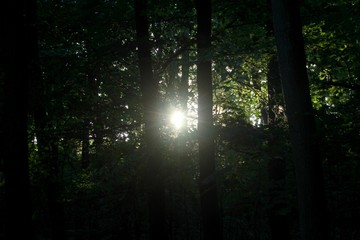Forest at dusk
