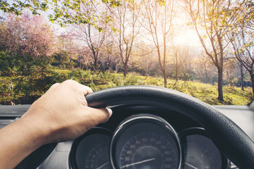 View on the dashboard of the truck driving.The driver is holding the steering wheel. Sakura cherry flowers and forest is in front of the car at loei provinc, Thailand.